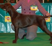 Emma Towns with Echo at Crufts 2007